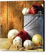 Onion Harvest Canvas Print by Sandra Cunningham