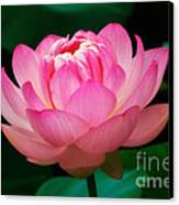 Opening Lotus Canvas Print by Susan Isakson