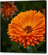 Orange Flower At The Manor Canvas Print by Noah Katz