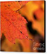 Orange Maple Leaf Canvas Print by Chris Hill