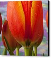 Orange Tulip Close Up Canvas Print