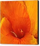 Orange Twist Canvas Print by Susan Herber