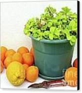Oranges And Vase Canvas Print