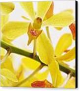 Orchid Canvas Print by Atiketta Sangasaeng