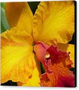 Orchid No. 21 Canvas Print by Gregory Young