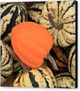 Organic Pumpkins Canvas Print by Wendy Connett