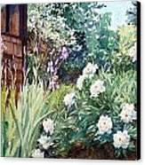 Oxenden Peonies Canvas Print by Peter Sit