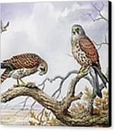 Pair Of Kestrels Canvas Print