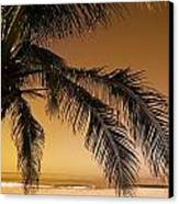 Palm Tree And Sunset In Mexico Canvas Print by Darren Greenwood