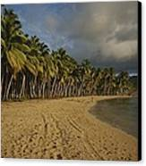 Palm Trees Line A Dominican Republic Canvas Print by Raul Touzon
