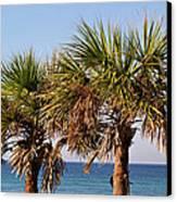 Palm Trees Canvas Print by Sandy Keeton