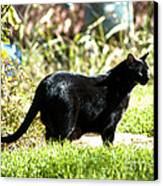 Panther In The Backyard Canvas Print by Cheryl Poland