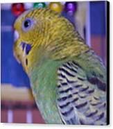Parakeet Canvas Print by Saifon Anaya