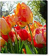Parrot Tulips In Philadelphia Canvas Print by Mother Nature