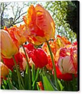 Parrot Tulips In Philadelphia Canvas Print