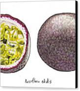 Passiflora Edulis Fruit Canvas Print