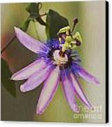 Passion Flower Canvas Print by Artist and Photographer Laura Wrede