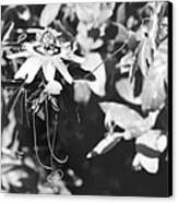 Passionflower And Tendrils Canvas Print
