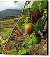 Passionfruit On The Vine With A View Of The Valley   Maui Canvas Print by J R Stern