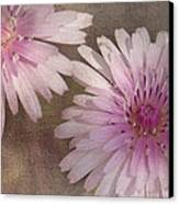 Pastel Pink Passion Canvas Print