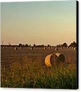 Peanut Field Bales At Dawn 1 Canvas Print
