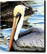 Pelican Pete Canvas Print by Karen Wiles