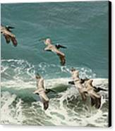 Pelicans In Flight Over Surf Canvas Print by Gregory Scott