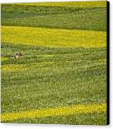 People In A Rapeseed Field Canvas Print by David Evans