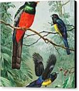 Perched And Flying Trogons Are Seen Canvas Print