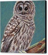 Perching Spotted Owl Canvas Print by Thomas Maynard