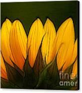 Petales De Soleil - A12 Canvas Print by Variance Collections