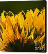 Petales De Soleil - A41b Canvas Print by Variance Collections