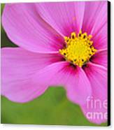 Petaline - P01a Canvas Print by Variance Collections