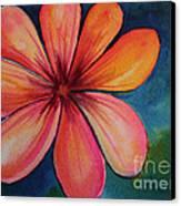 Petals Canvas Print by Carolyn Weir