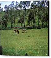 Petaluma Pasture Canvas Print
