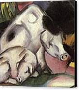 Pigs Canvas Print by Franz Marc