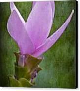 Pink Blossom Canvas Print by Susan Candelario