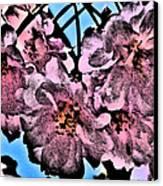 Pink Cherry - Black On Blue Canvas Print by Jen White