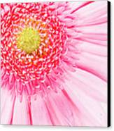 Pink Delight II Canvas Print by Tamyra Ayles