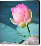 Pink Lotus 2 Canvas Print by Julie Palencia
