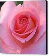 Pink Rose Canvas Print by Naomi Berhane