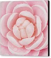 Pink Up Close And Personal Canvas Print