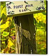 Pinot  03 Canvas Print