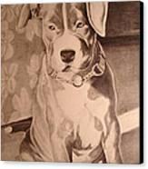 Pitty Pet Portrait Canvas Print by Yvonne Scott