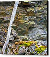 Plant Life On Rocky Canadian Lake Shore Canvas Print