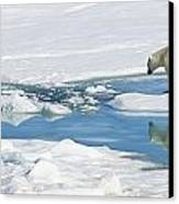 Polar Bear, Ursus Maritimus Canvas Print by Ralph Lee Hopkins