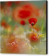 Poppies And Wildflowers In The Desert Canvas Print by Annie Griffiths