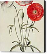 Poppies Corn Canvas Print