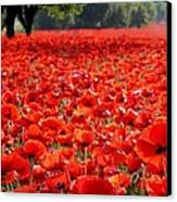 Poppies  Canvas Print by Tammy Cantrell