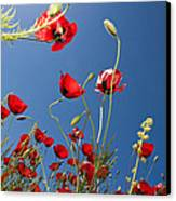 Poppy Field Canvas Print by Ayhan Altun